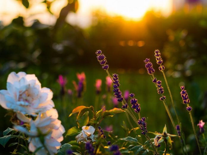 Close up view of flowers at sunset at Mississippi Botanical Gardens
