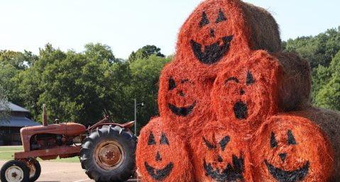 hay bales painted as pumpkins