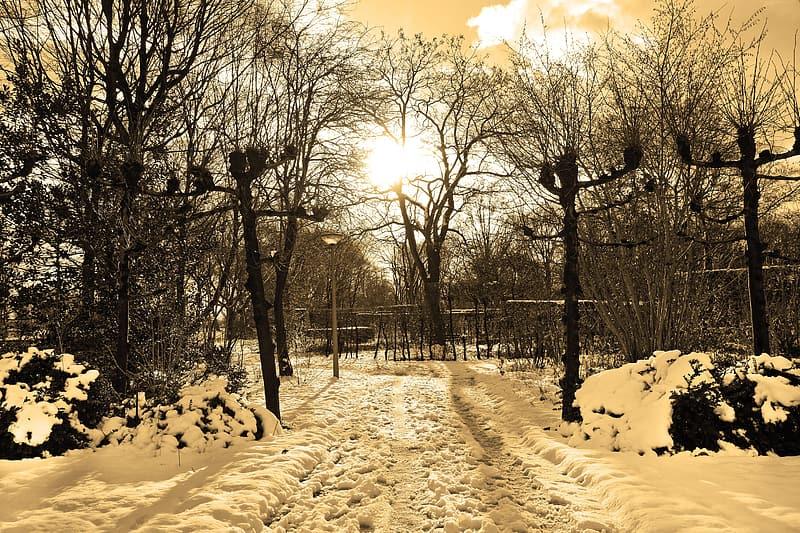 bare trees at winter season
